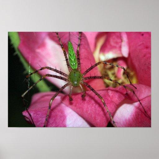 Araña en la impresión color de rosa de la lona posters