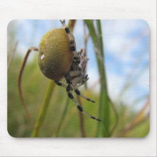 Araña en un hilo alfombrillas de ratones