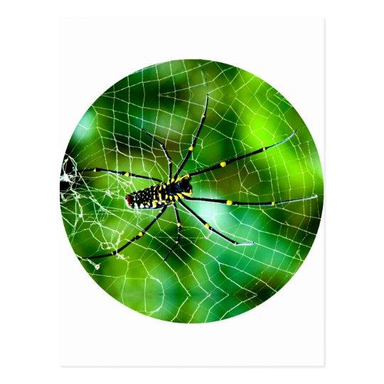 Araña gigante del Argiope Tarjetas Postales