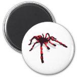Araña gigante imán para frigorífico