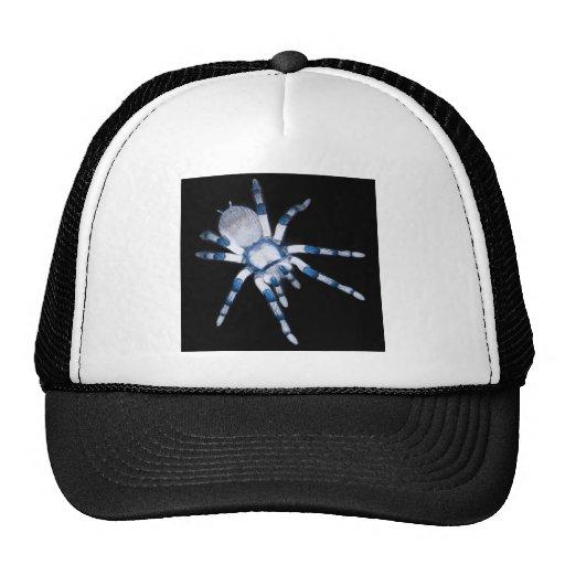 araña gorra