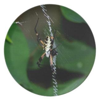 Araña grande del tejedor del orbe platos de comidas