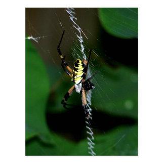 Araña grande del tejedor del orbe postal