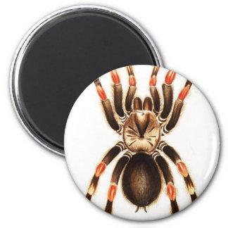 Araña Imán Redondo 5 Cm