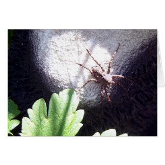 Araña manchada tarjeta de felicitación