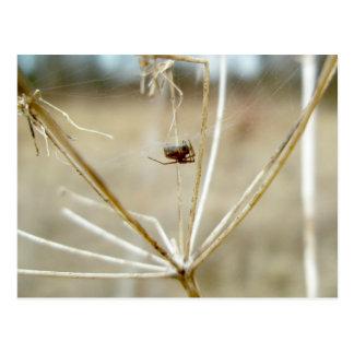 Araña minúscula en la postal del cordón de la rein
