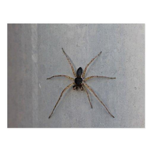 Araña negra y beige de la foto macra, 7 piernas postales