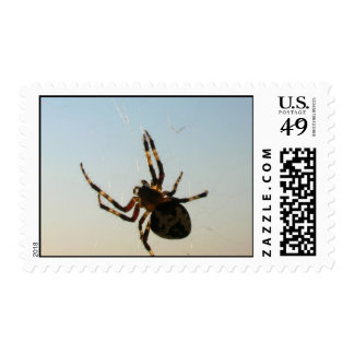Araña Orbe-Que teje Estampilla