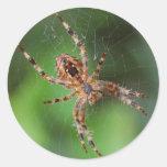 Araña Pegatina Redonda