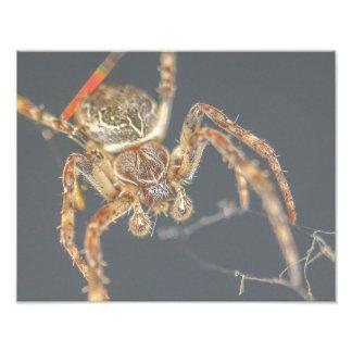 Araña peluda fotografía