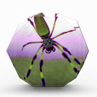 Araña púrpura y verde de neón
