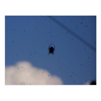 Araña que espera en una comida tarjeta postal