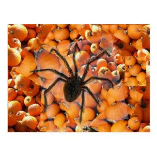 Araña que se arrastra en las calabazas postal