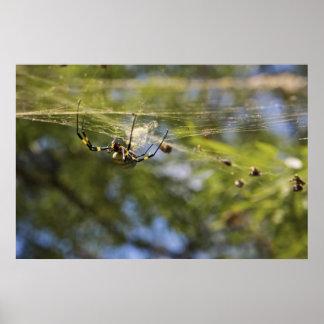 Araña que se arrastra en un Web Impresiones