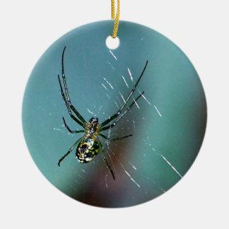 Araña que teje del orbe de la huerta adorno para reyes