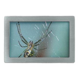 Araña que teje del orbe de la huerta hebillas cinturón rectangulares