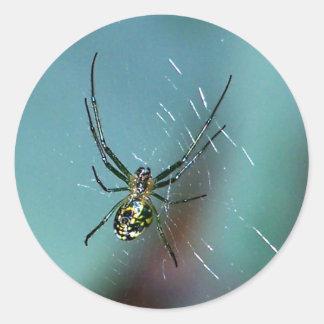 Araña que teje del orbe de la huerta pegatina redonda
