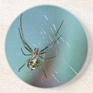 Araña que teje del orbe de la huerta posavasos para bebidas