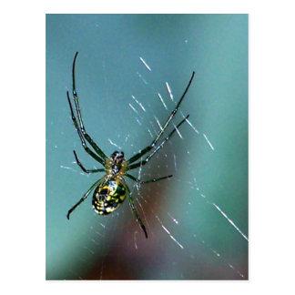 Araña que teje del orbe de la huerta postales