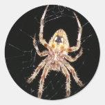 Araña que teje del orbe del jardín pegatinas redondas