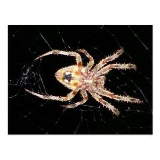 Araña que teje del orbe del jardín postal