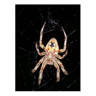 Araña que teje del orbe del jardín tarjeta postal
