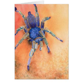 Araña - Tarantula Tarjeta De Felicitación