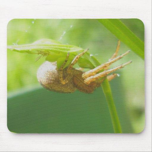 Araña Thomisid Mousepad del cangrejo