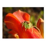 Araña verde postales