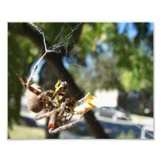 Araña y presa cojinete