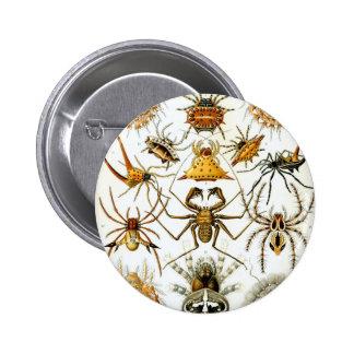 Arañas de los arácnidos de Ernst Haeckel Pin Redondo De 2 Pulgadas
