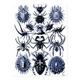 Arañas de los arácnidos de Haeckel en azul Postal