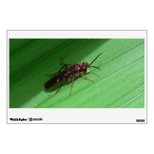 Arañas de los arácnidos de los insectos de Kooskoo