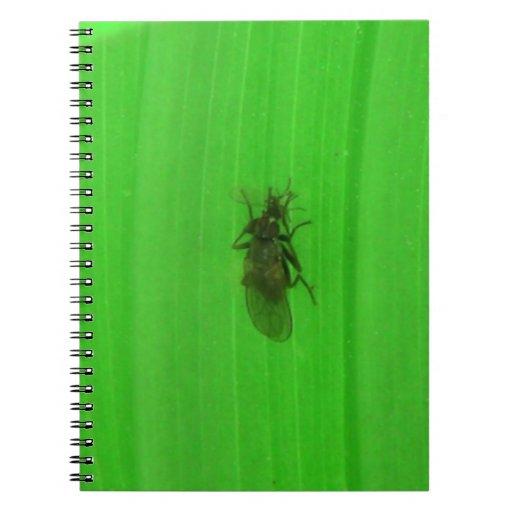 Arañas de los arácnidos de los insectos de Kooskoo Libro De Apuntes