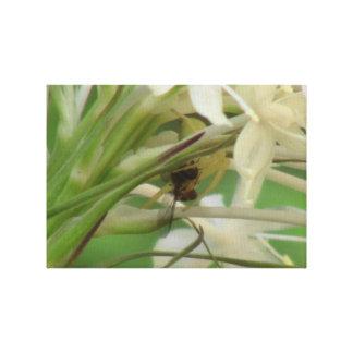 Arañas de los arácnidos de los insectos de Kooskoo Impresión De Lienzo