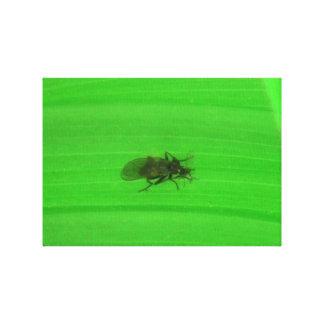 Arañas de los arácnidos de los insectos de Kooskoo Impresion De Lienzo