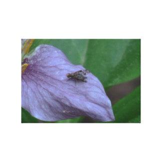 Arañas de los arácnidos de los insectos de Kooskoo Lienzo Envuelto Para Galerías