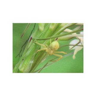 Arañas de los arácnidos de los insectos de Kooskoo Impresiones En Lona Estiradas
