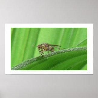 Arañas de los arácnidos de los insectos de Kooskoo Impresiones