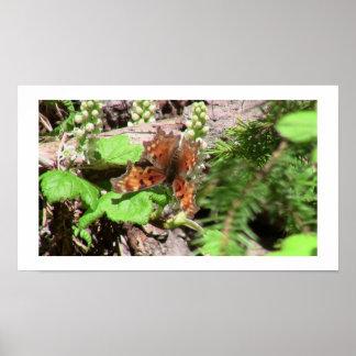 Arañas de los arácnidos de los insectos de Kooskoo Poster