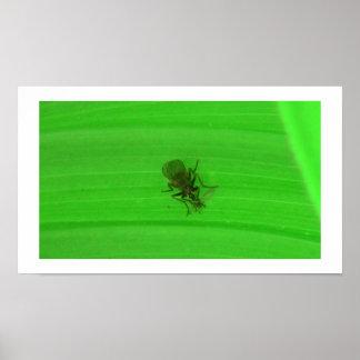 Arañas de los arácnidos de los insectos de Kooskoo Posters