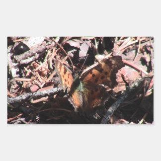 Arañas de los arácnidos de los insectos de Kooskoo Etiqueta
