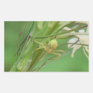 Arañas de los arácnidos de los insectos de Kooskoo Rectangular Pegatina