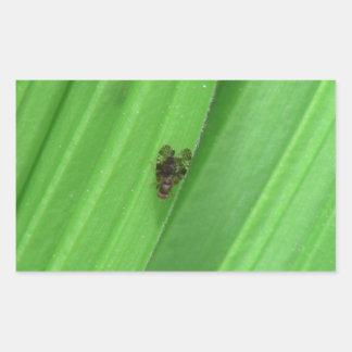 Arañas de los arácnidos de los insectos de Kooskoo Rectangular Pegatinas