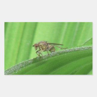 Arañas de los arácnidos de los insectos de Kooskoo Etiquetas