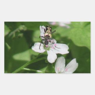 Arañas de los arácnidos de los insectos de Kooskoo Pegatinas