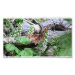 Arañas de los arácnidos de los insectos de Kooskoo Impresiones Fotográficas