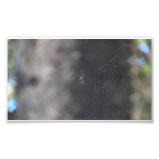 Arañas de los arácnidos de los insectos de Kooskoo Cojinete