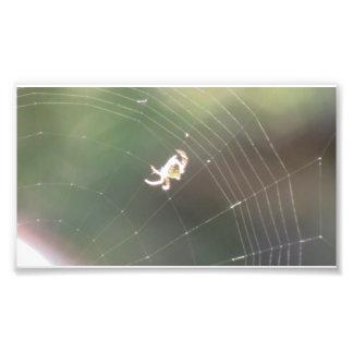 Arañas de los arácnidos de los insectos de Kooskoo Arte Fotográfico