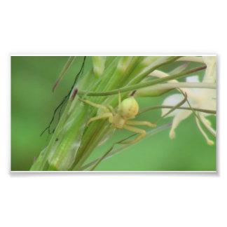 Arañas de los arácnidos de los insectos de Kooskoo Arte Con Fotos